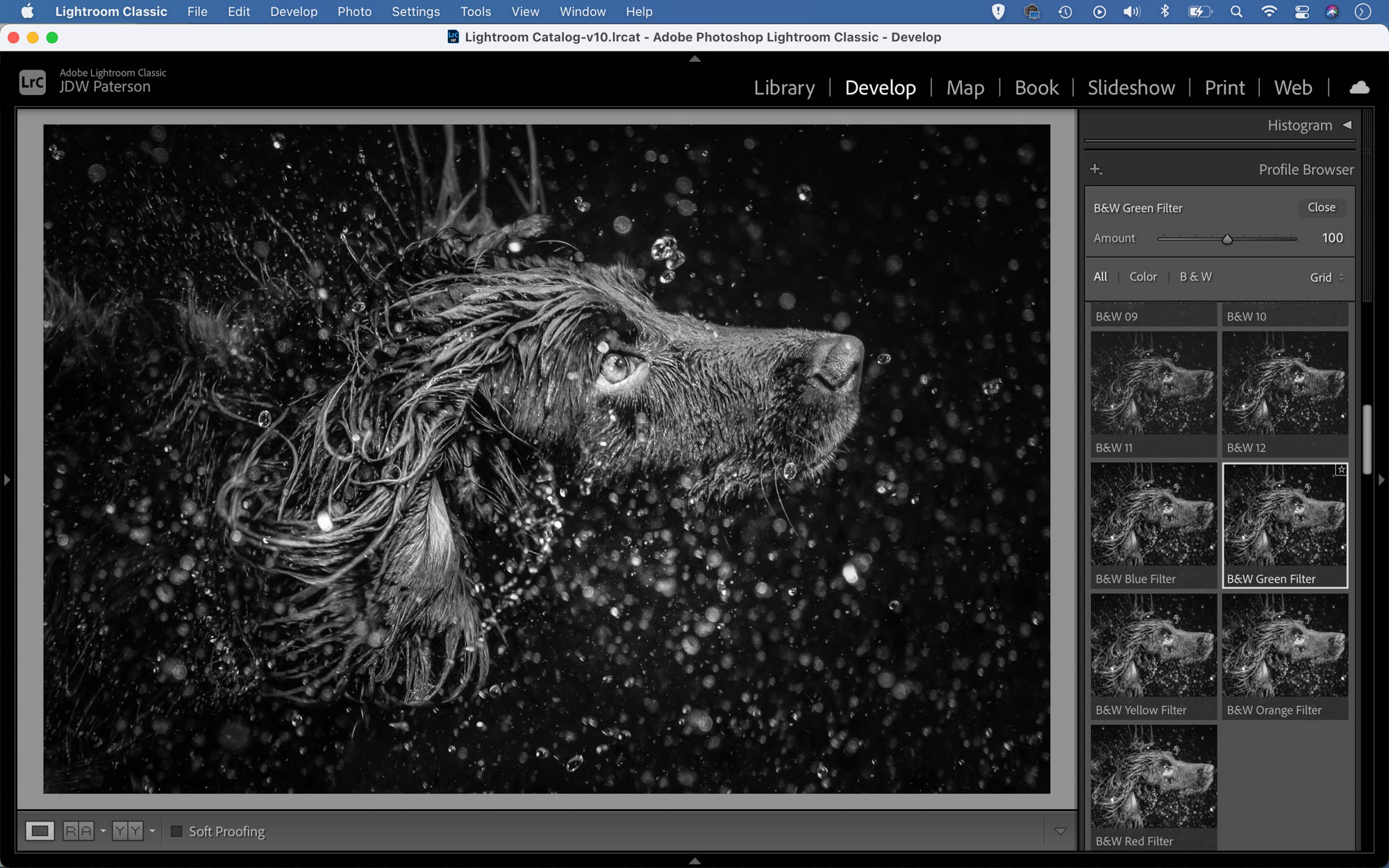 Converting a dog portrait to black and white in Adobe Lightroom
