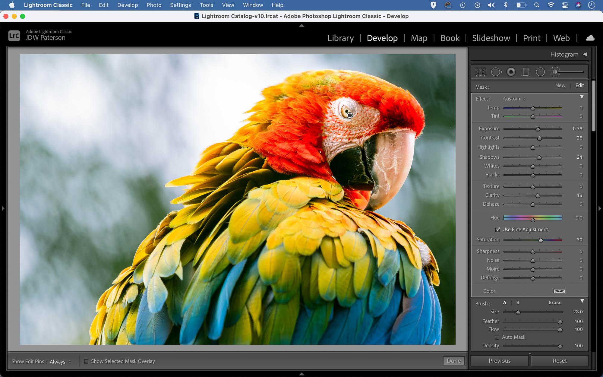 Portrait of a parrot as seen in Adobe Lightroom