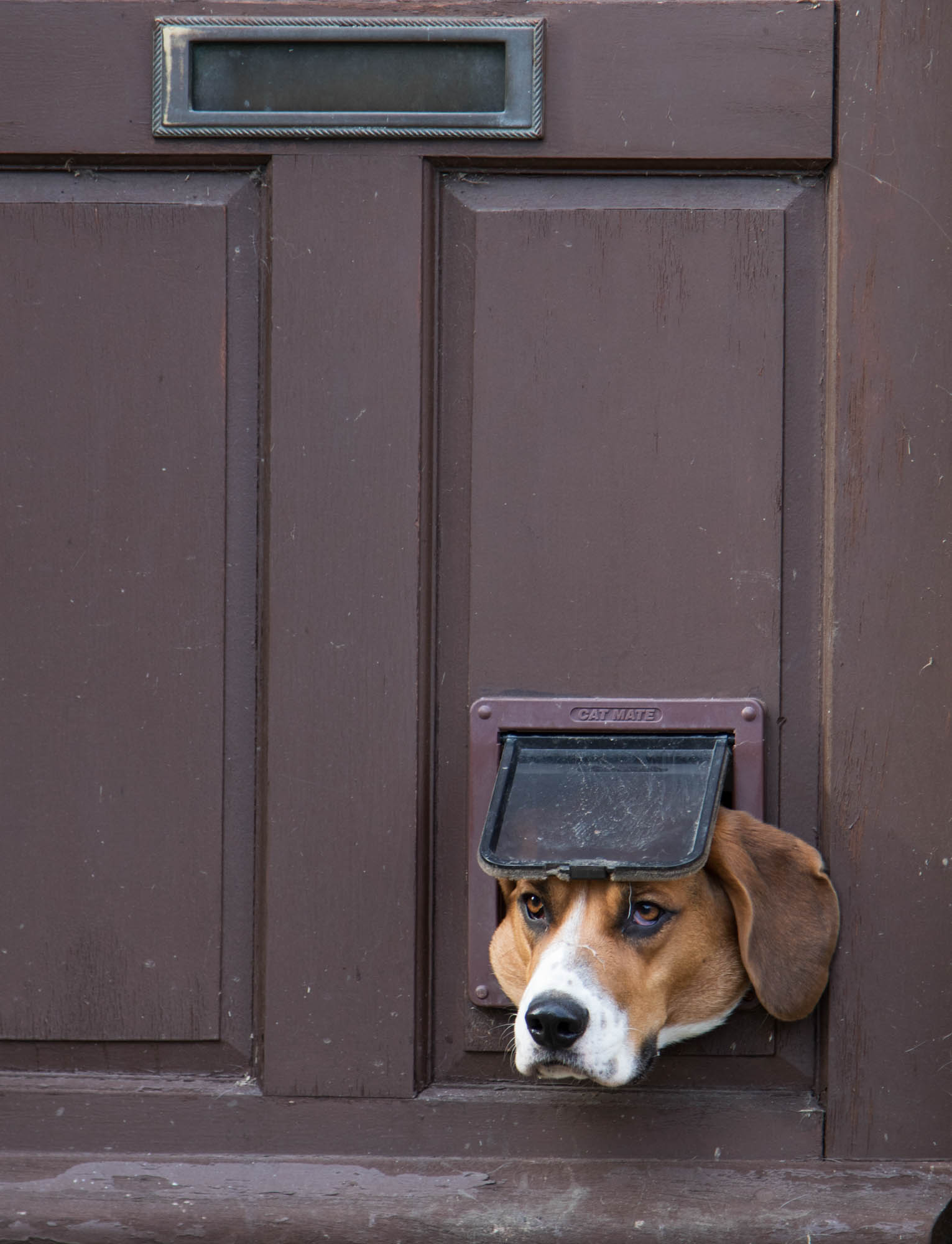 Dog looking into street through a catflap
