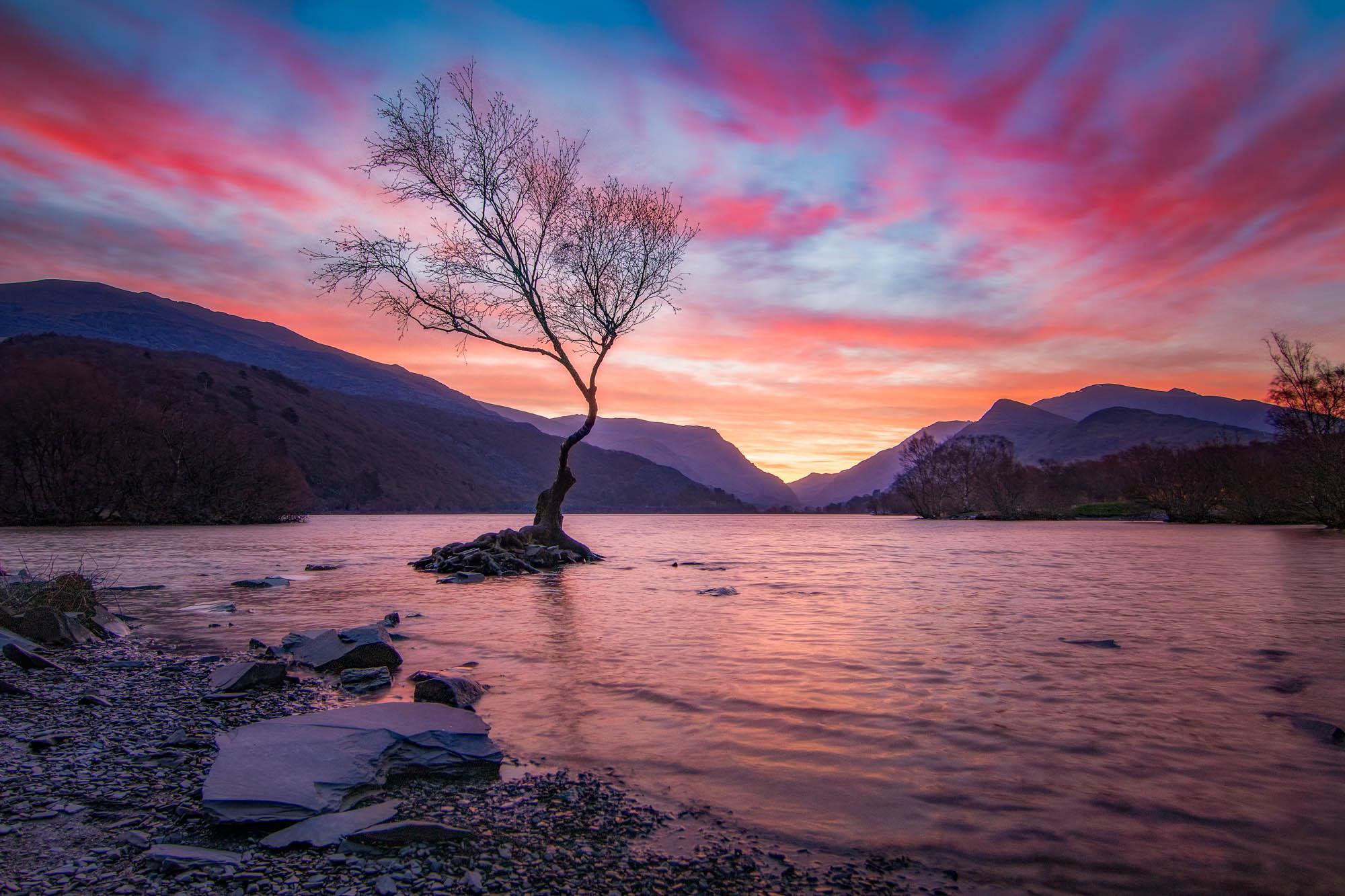 A lone tree at dawn over Llyn Padarn, Wales