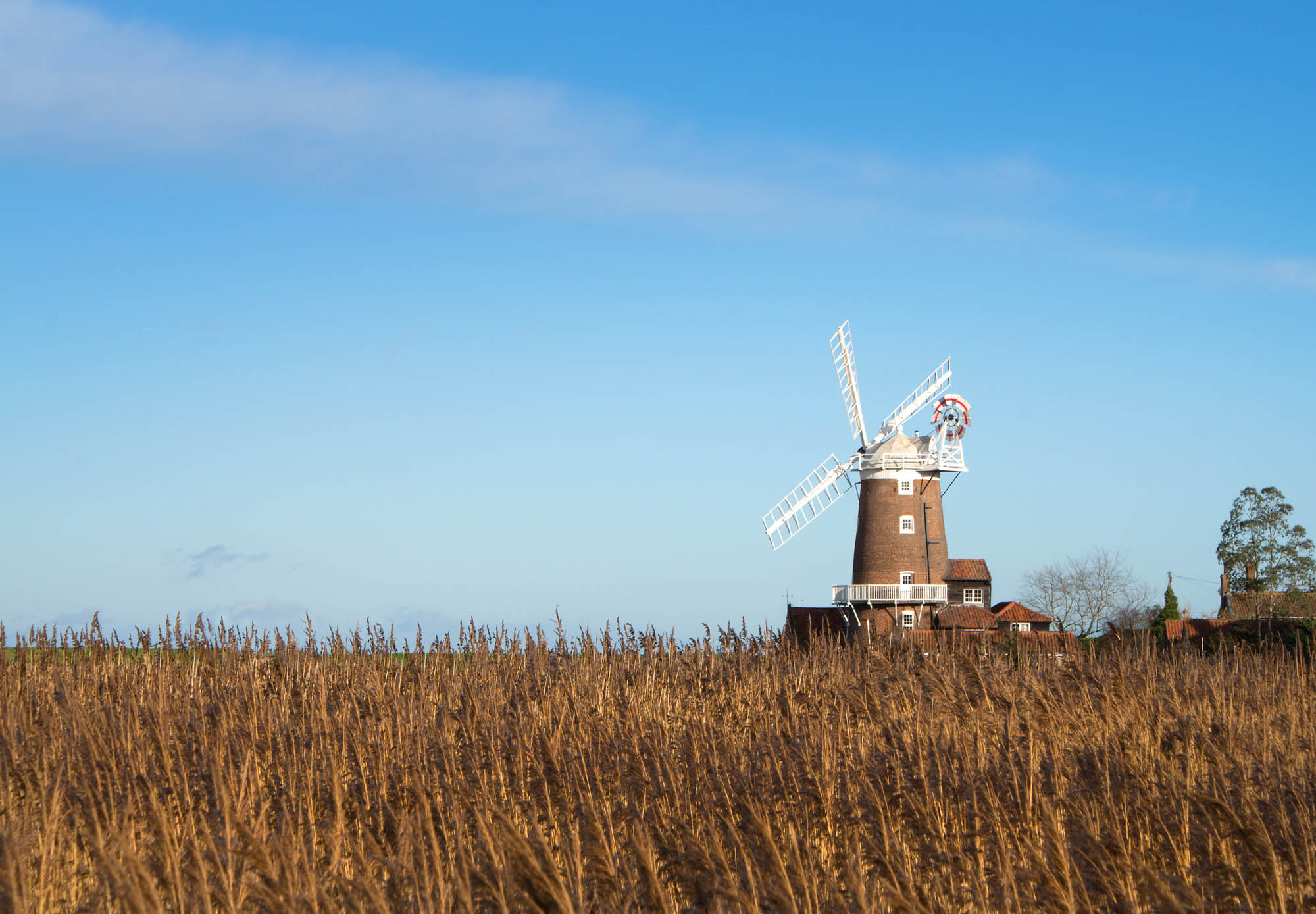 A view over the reeds to the windmill at Cley Next The Sea in Norfolk.