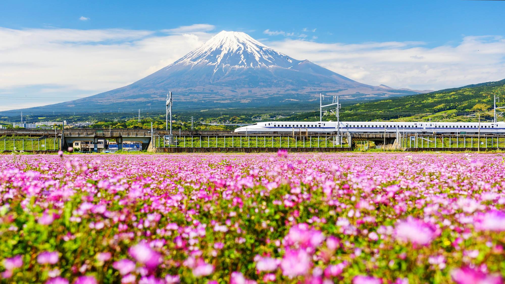Shinkanzen or 'Bullet train' passes Mt. Fuji and Shibazakura during Spring, Shizuoka, Japan