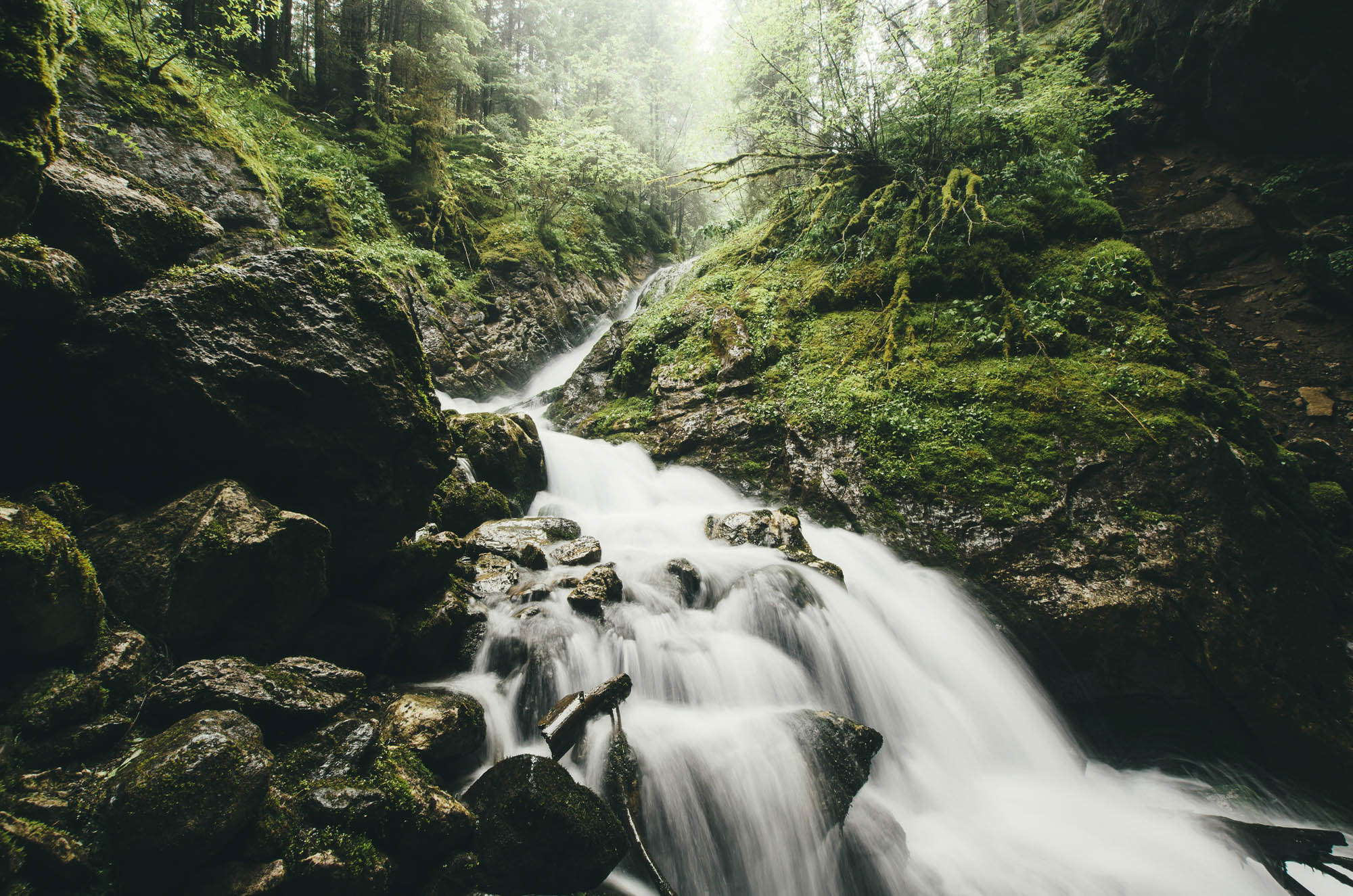 Forest stream waterfall with lush vegetation, wilderness landscape