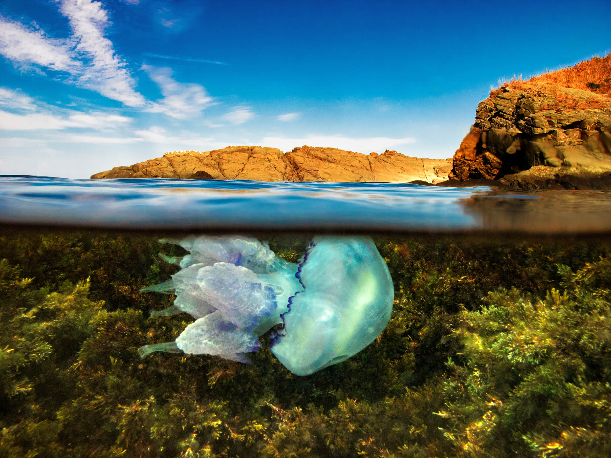 A split level photo of reef with Jellyfish underwater with blue sky and rocks above water.