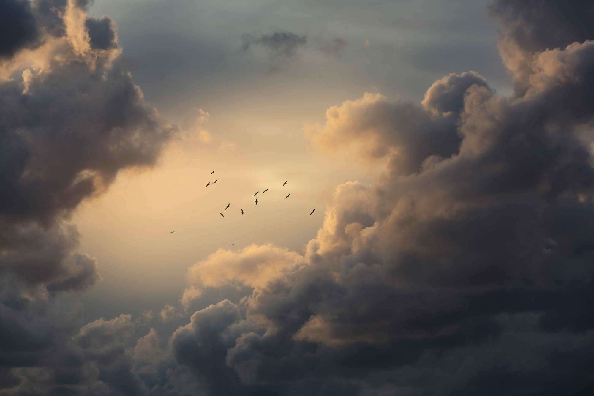 Birds heading south through the clouds at sunset