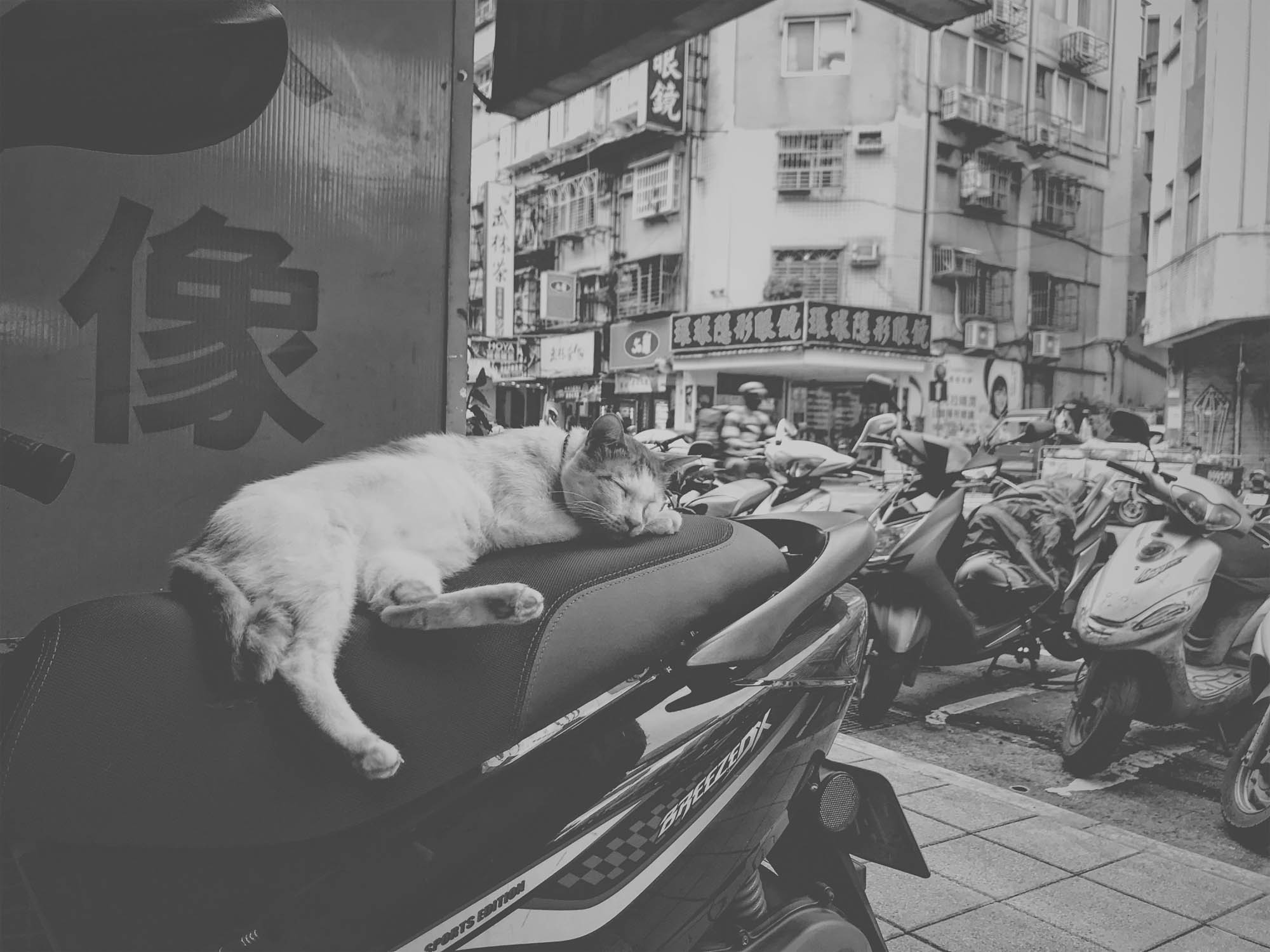 Street cat in Taipei, Taiwan, captured on an iPhone 7