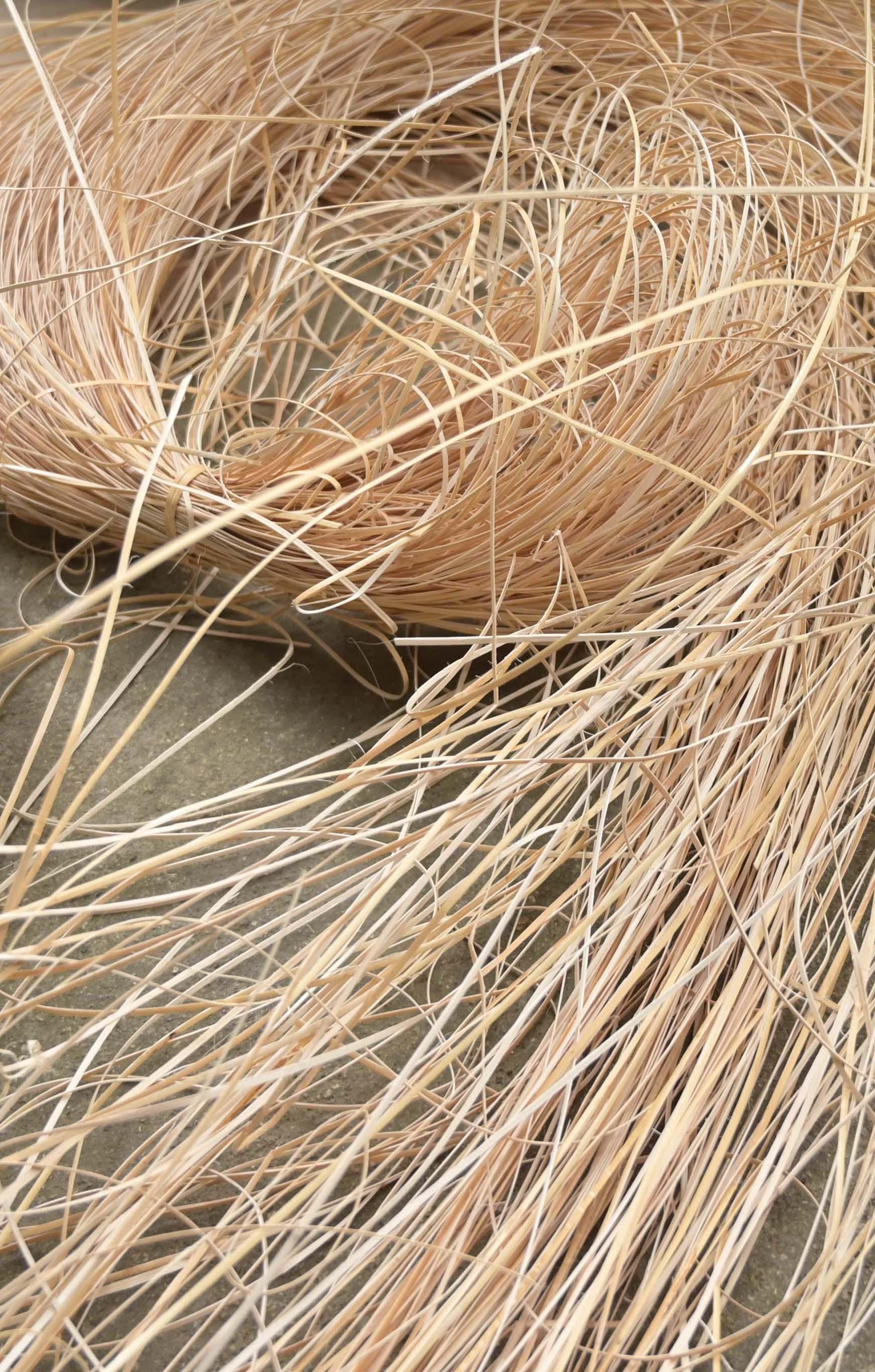 rattan for weaving