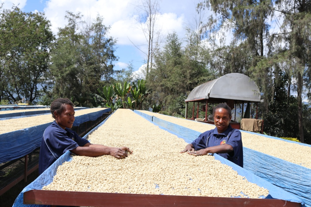 Kongo coffee papua new guinea