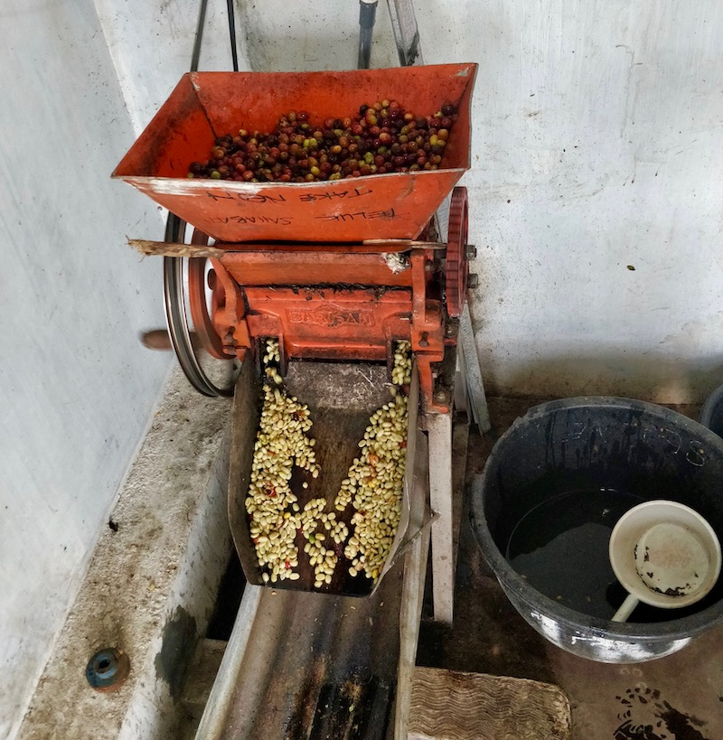 local coffee cherry pulping machine
