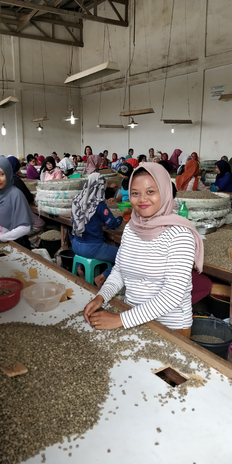 Hand sorting coffee Mandheling Indonesia Matahari gt