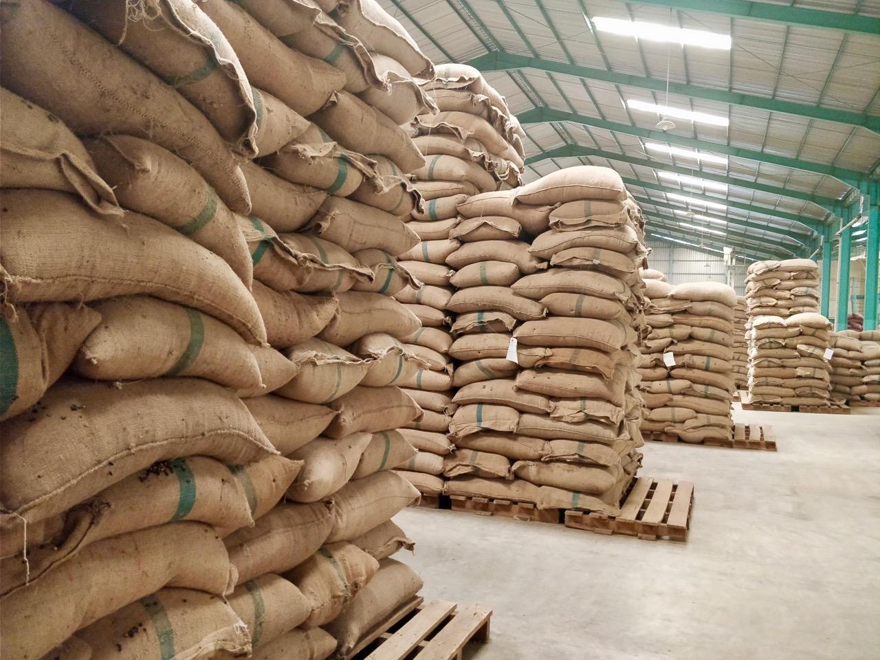 Packed green coffee in jute bags Indonesia Matahari gt