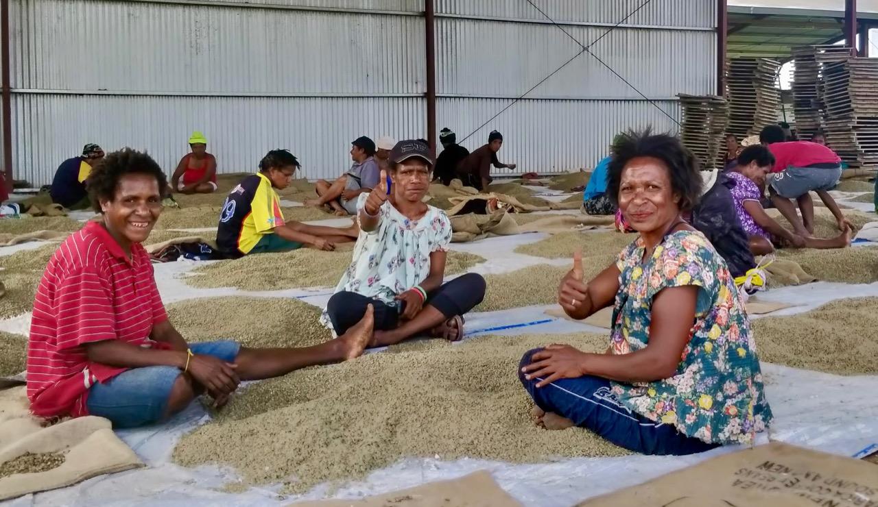Papaua new guinea coffee picking Matahari gt