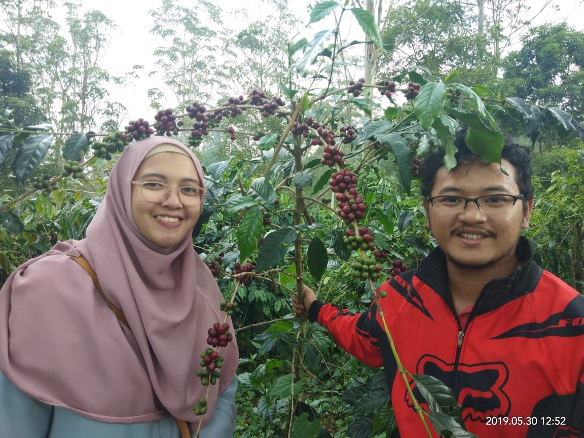 Java Arabica farmer producer Matahari gt