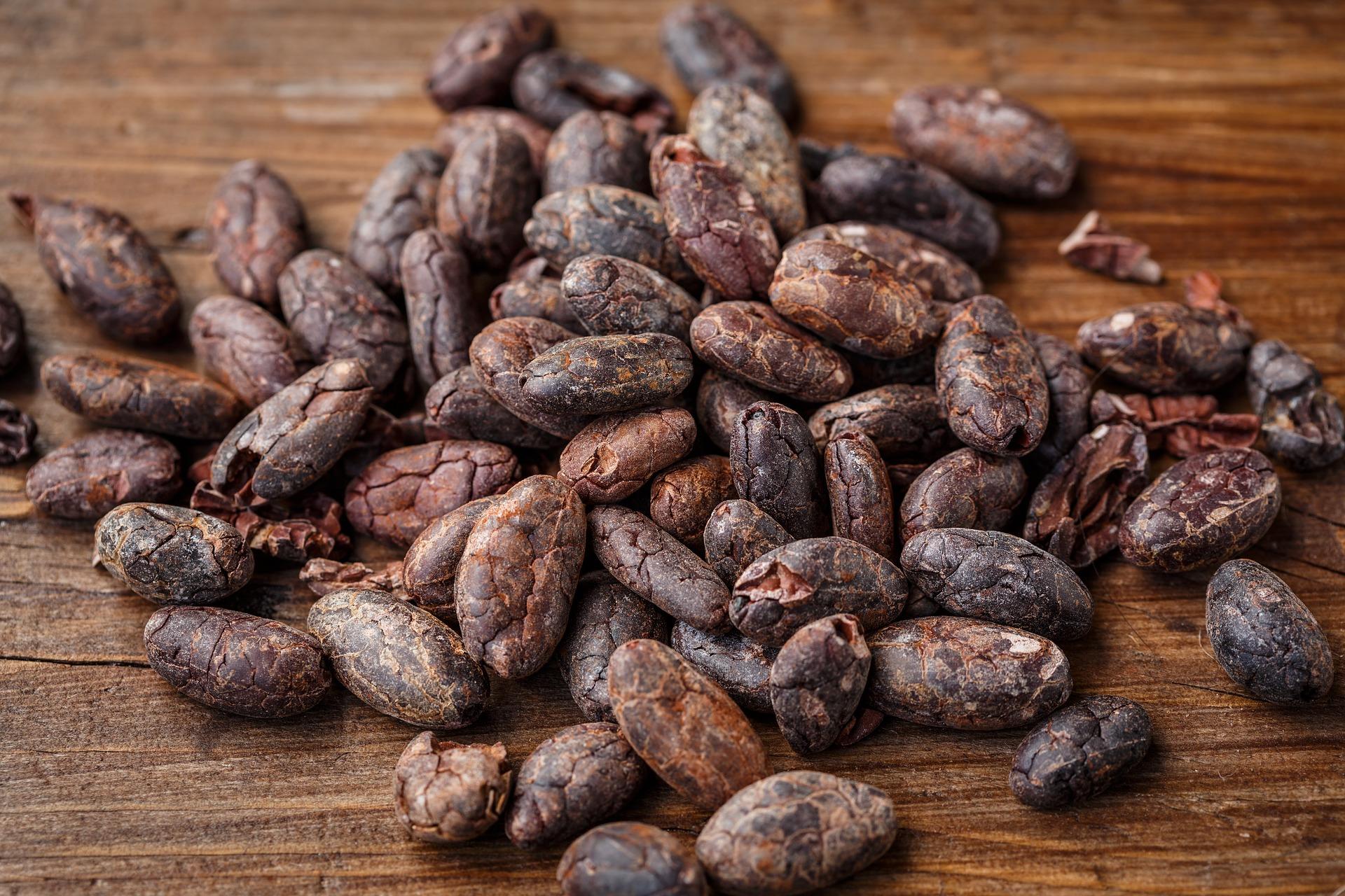 dried cocoa beans Matahari gt
