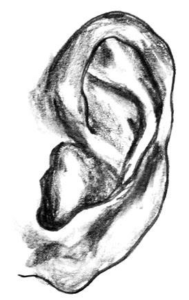 A pencil drawing of an ear