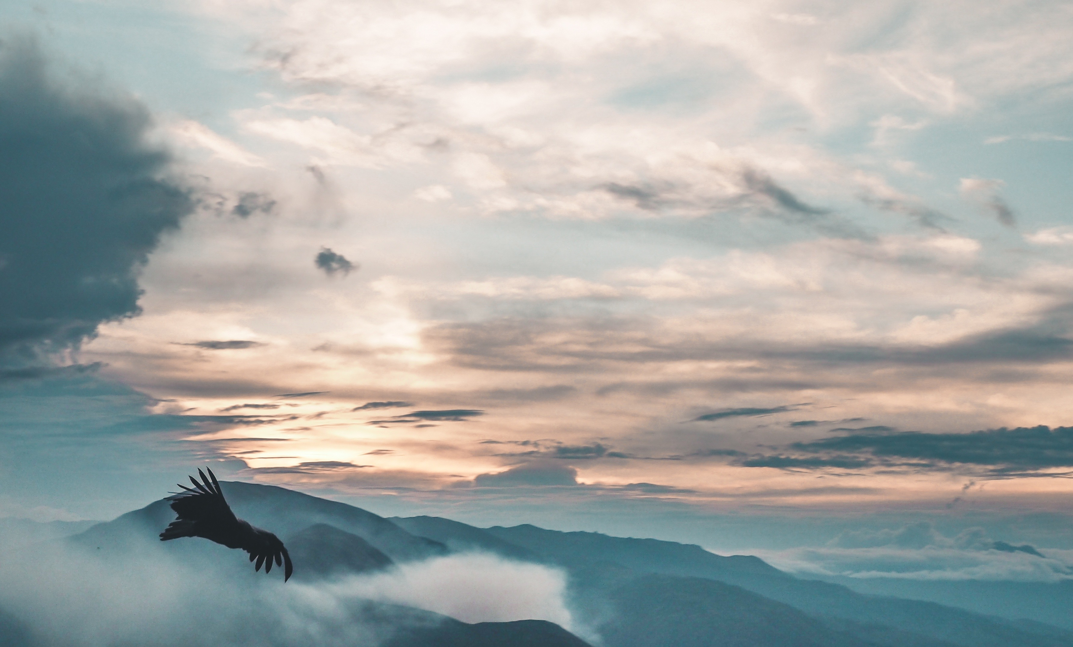 A bird flying in the mountains