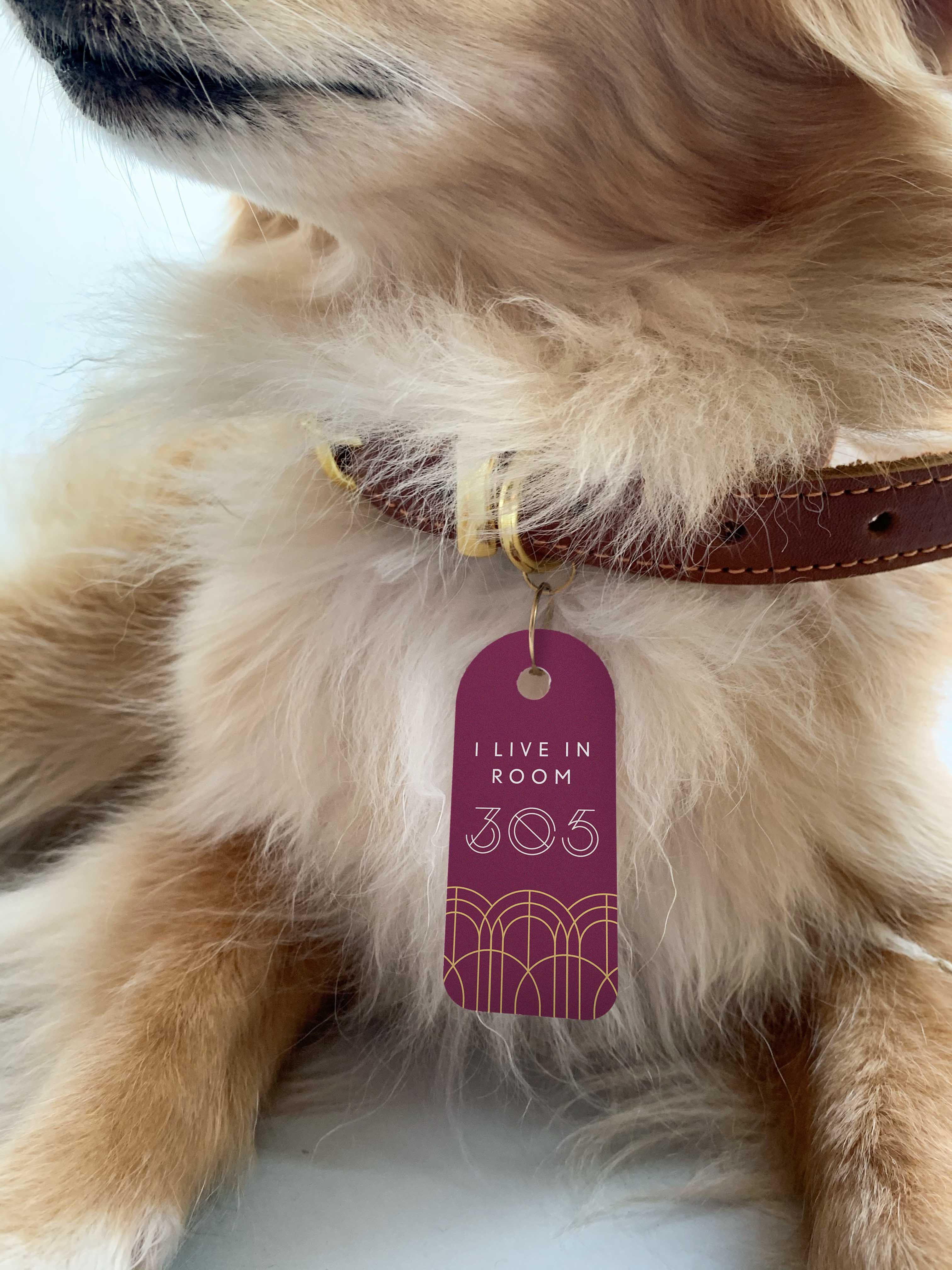 A golden dog wearing her keycard on her collar
