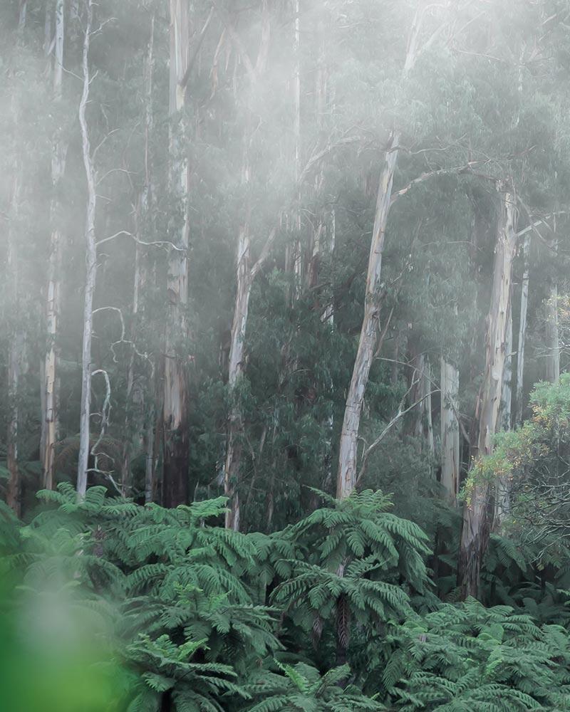 Aidan Weichard - Australian Artist - Abstract colourful native flora art paintings