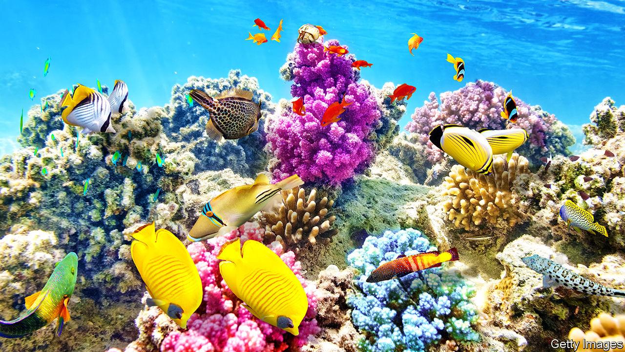 côn đảo sinh vật biển