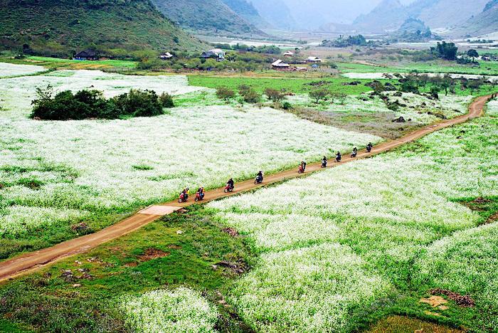 Mùa hoa cải ở Mộc Châu