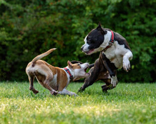 animal bite personal injury lawyer south florida