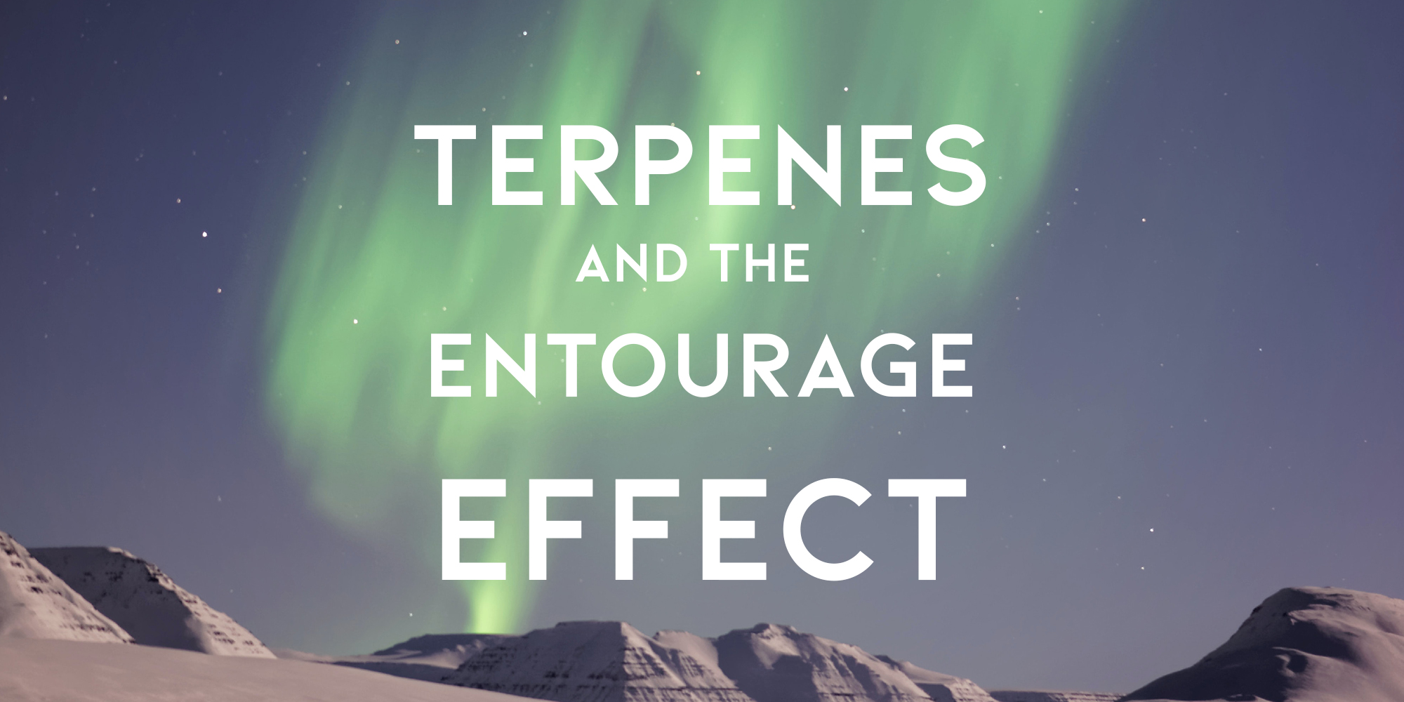 How Terpenes Boost Your High - Experience The Entourage Effect With Live Resin