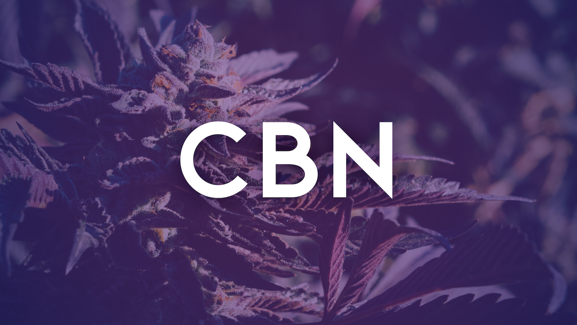There are hundreds of Cannabinoids. Today we are highlighting CBN, the sleepy cannabinoid.