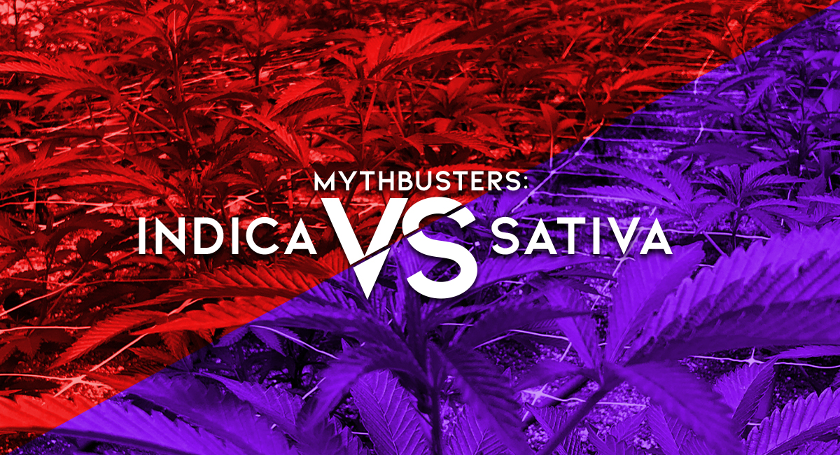 The truth is there are better ways to categorize strains and effects than simply Indica, Sativa, and Hybrid. Learn why we care more about important characteristics like terpenes and cannabinoids.