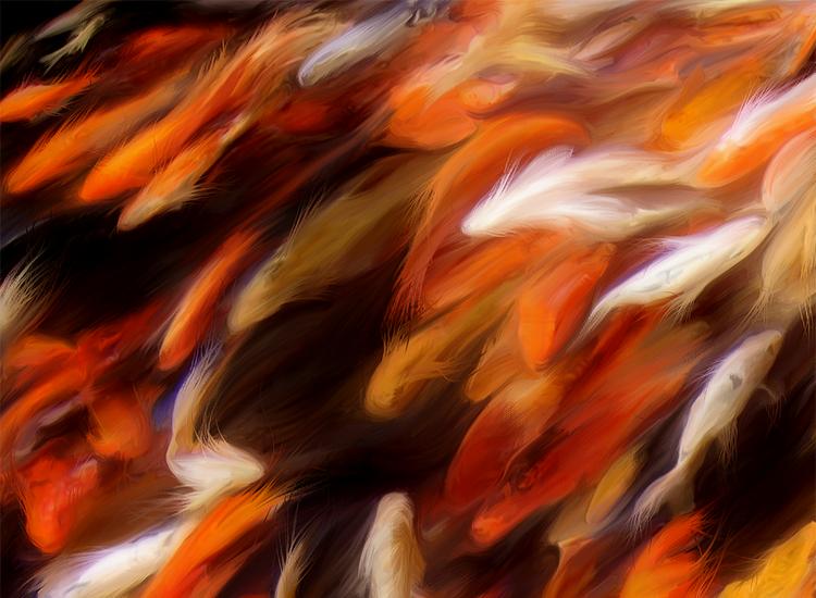 Koi Fish Digital Painting