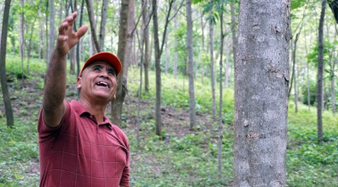 reforestation image