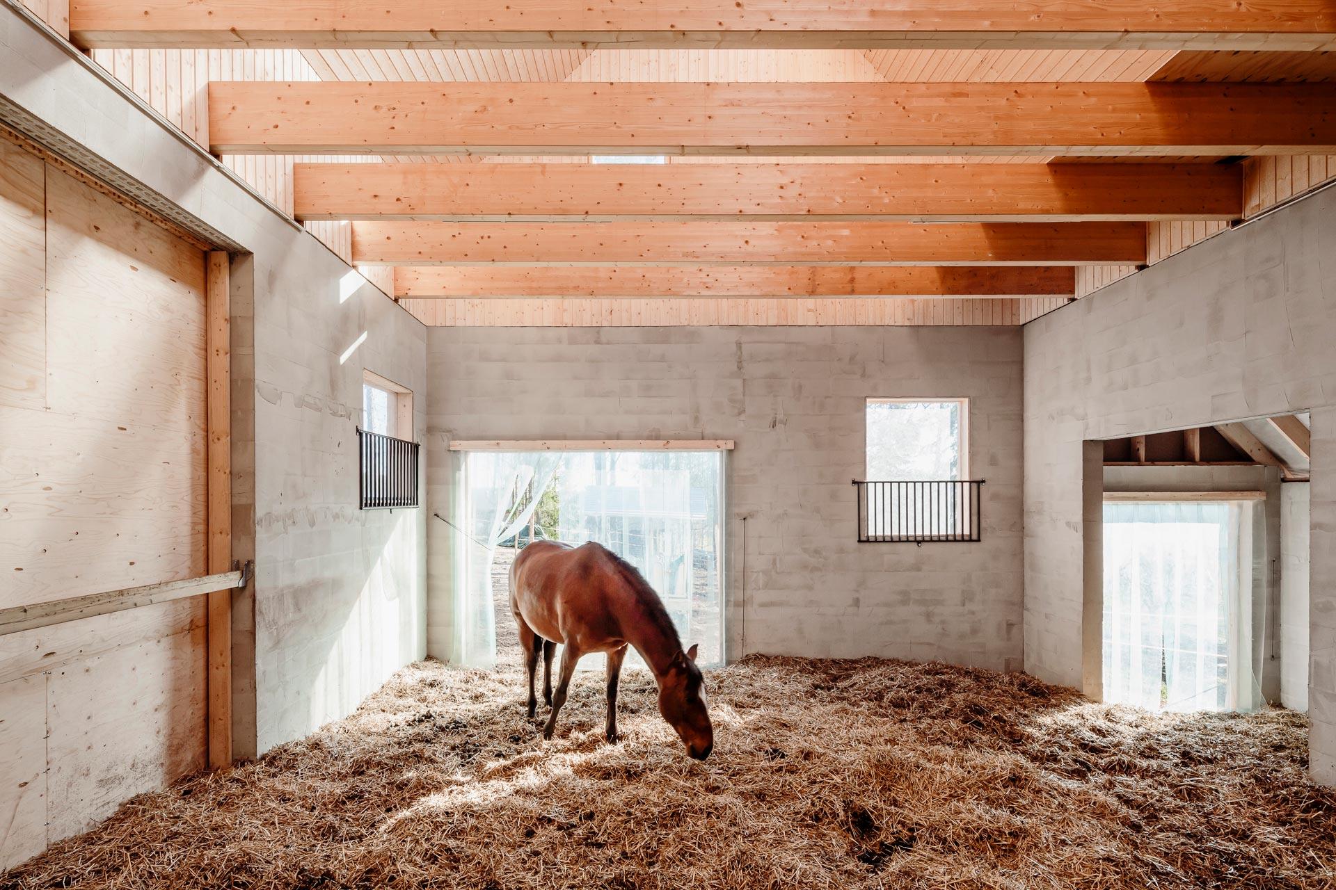 Kuva hevosesta tallin sisäänkäynnillä
