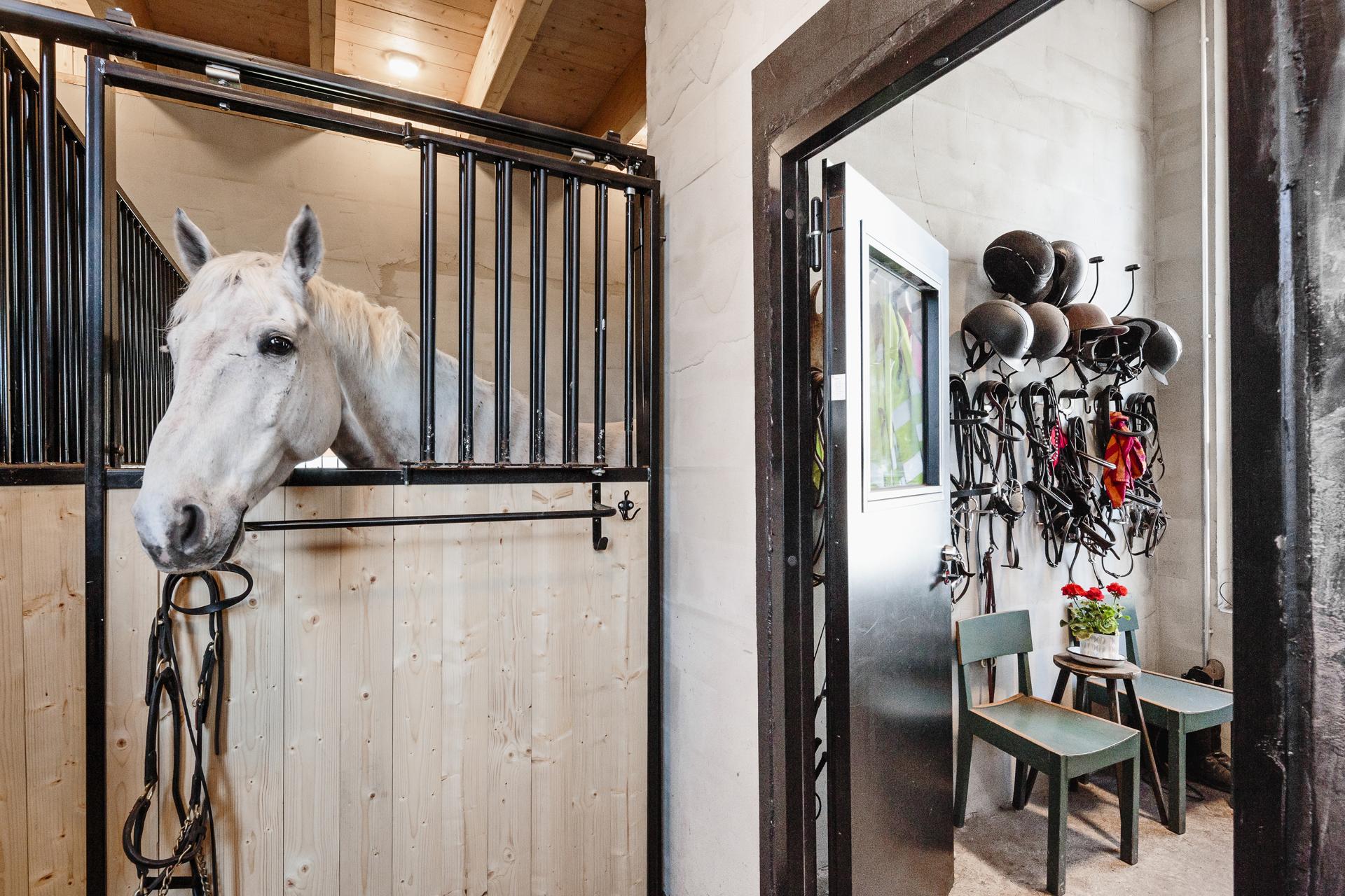 Kuva hevosesta pilttuussa, sekä varustehuoneesta