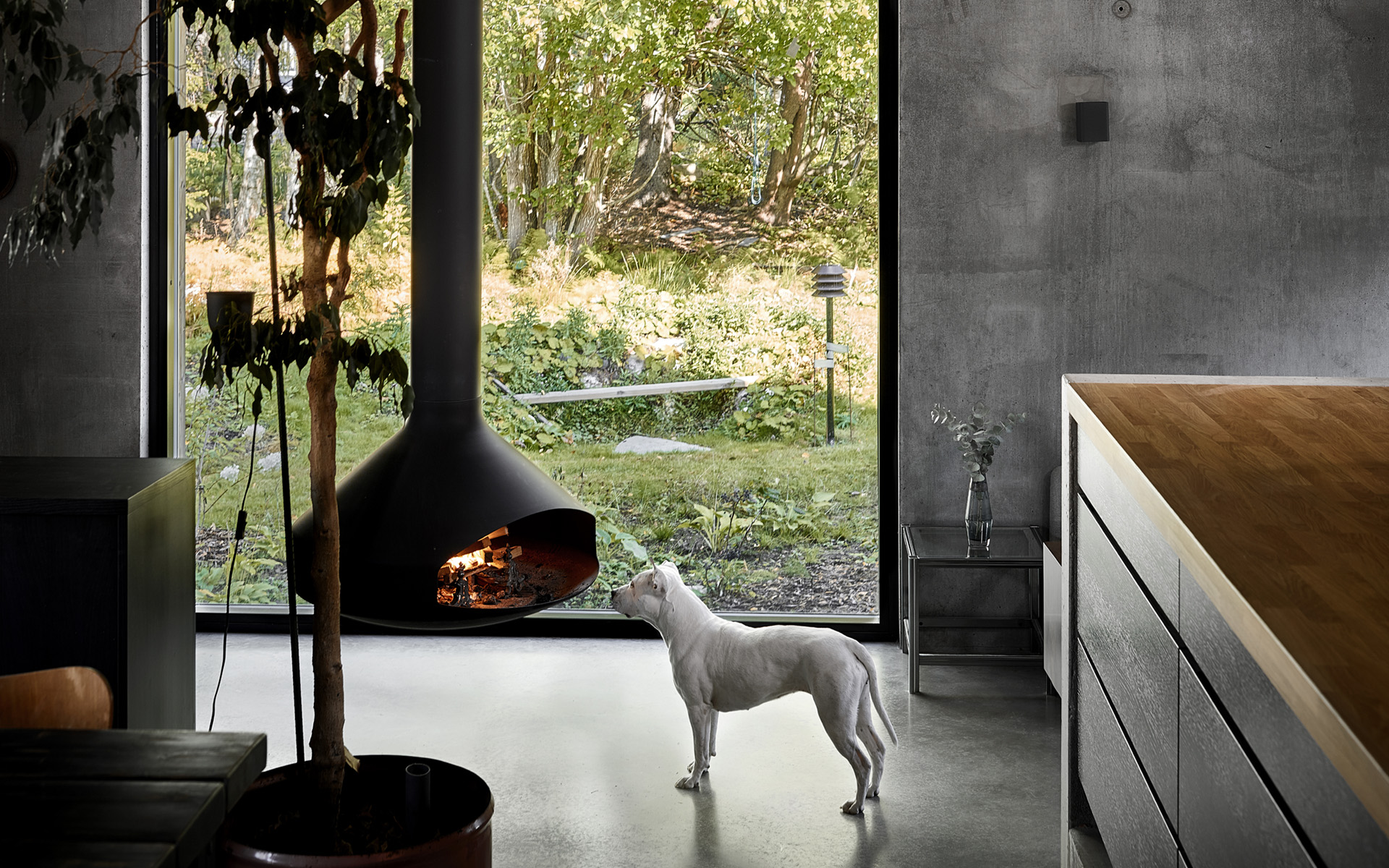 Photo of a dog and a fireplace in front of a window