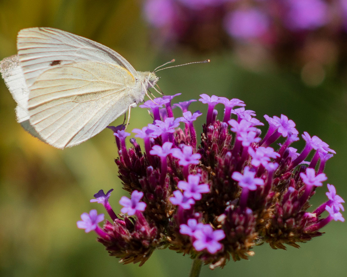 Butterfly on flower as metaphor for positive habits and change