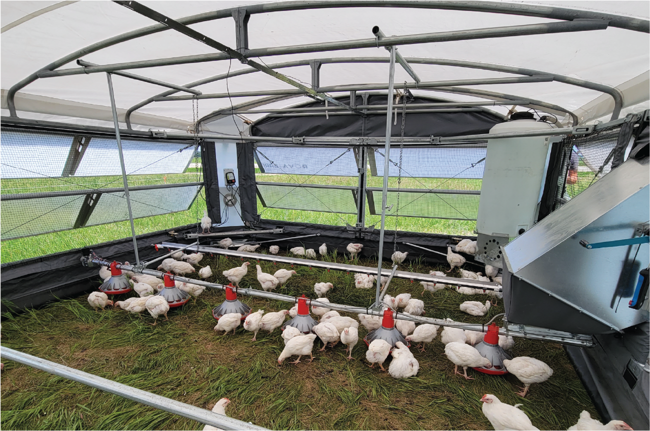 Automation can streamline pasture-raised poultry production