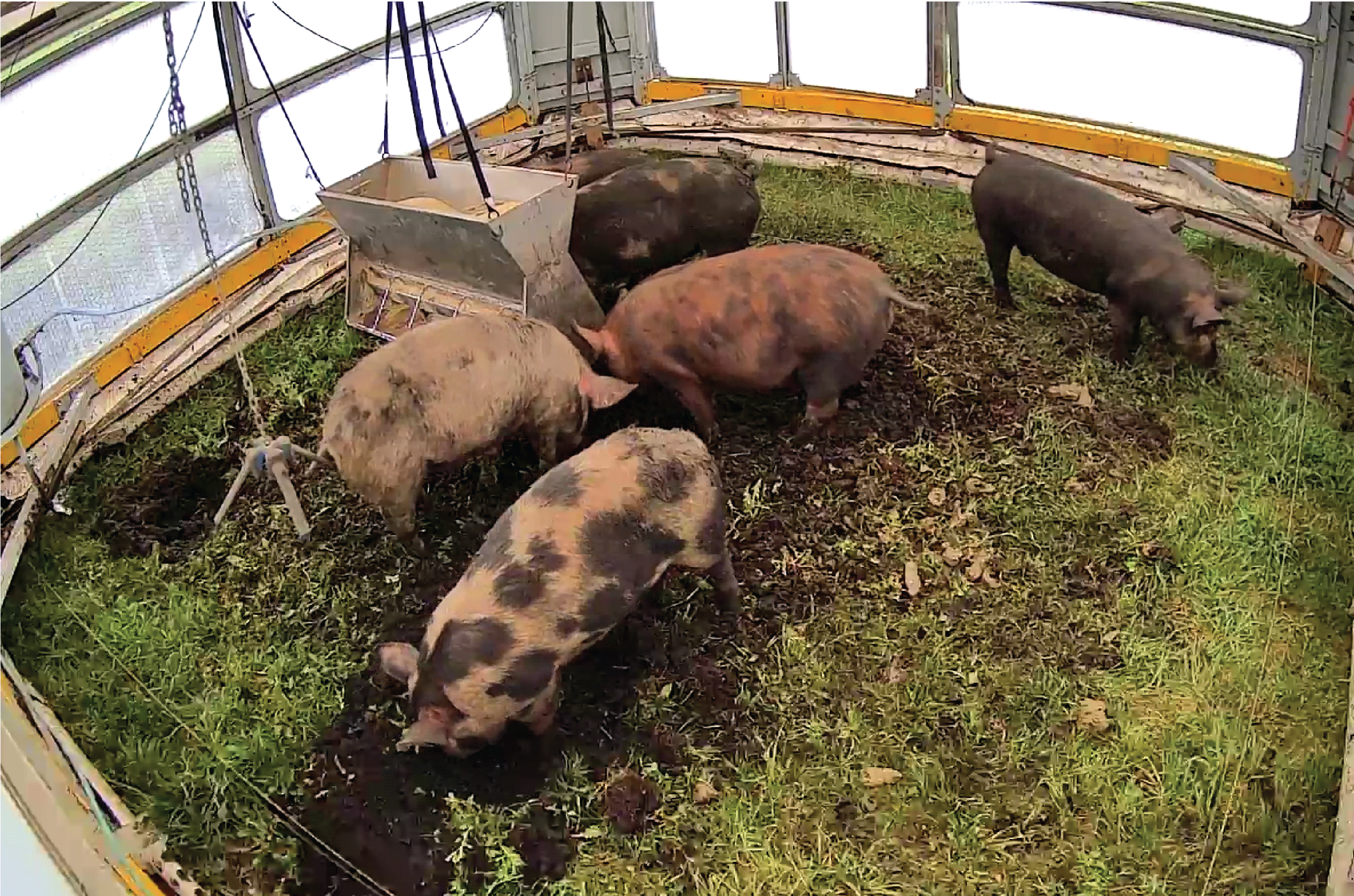 Pigs on the move: Self-driving pig houses