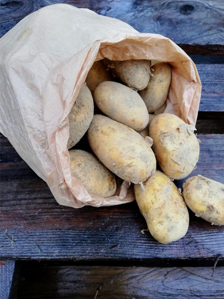 Potatis Annabelle 16/9