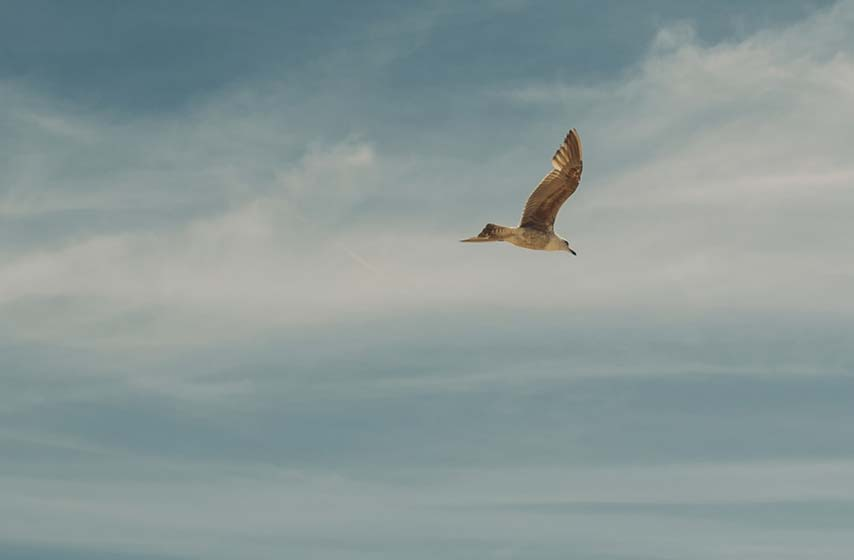 seagull hovering in sky