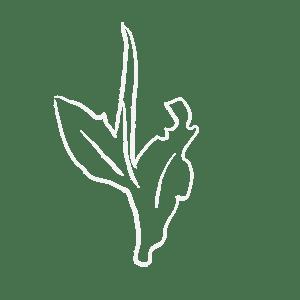 icon of white tea