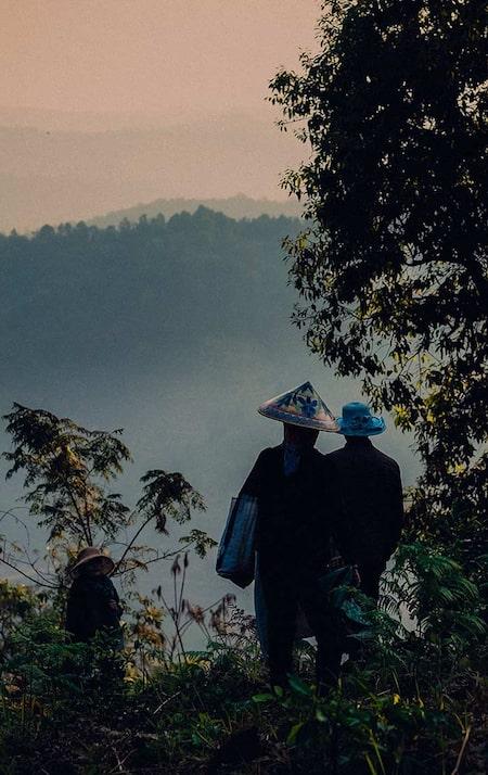 tea farmers picking tea