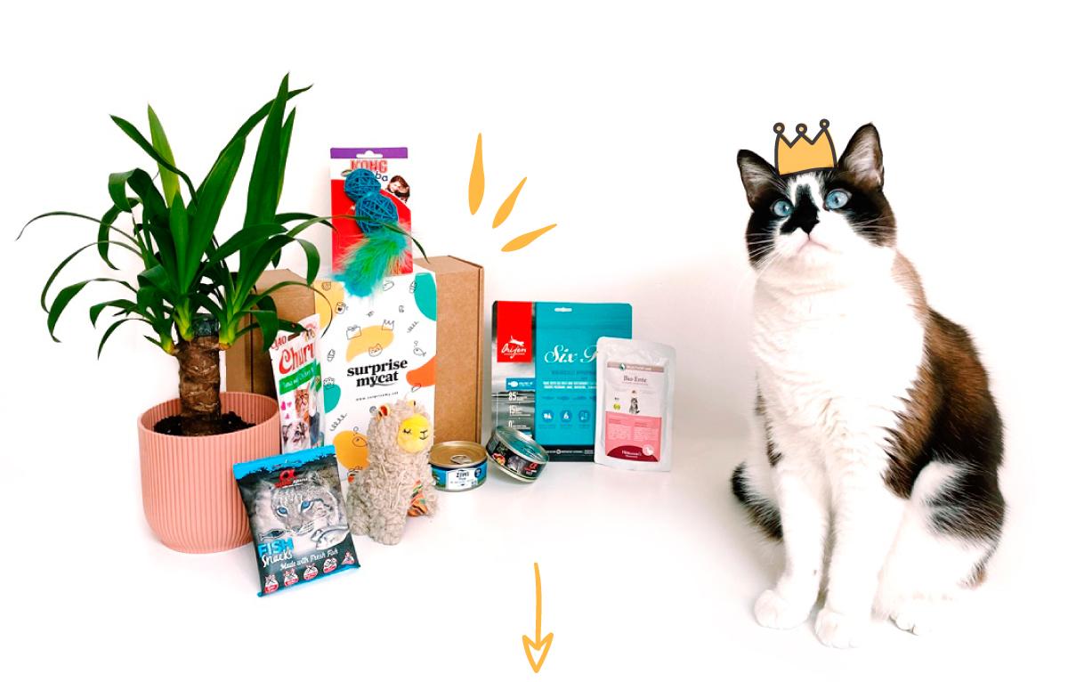 caja-surprise-my-cat