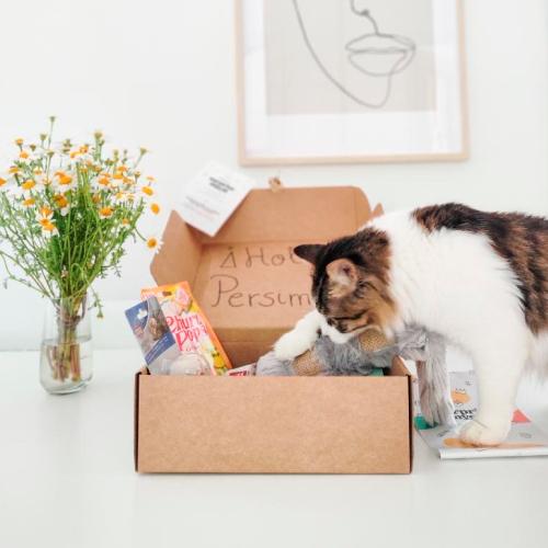 caja-personalizada-gato