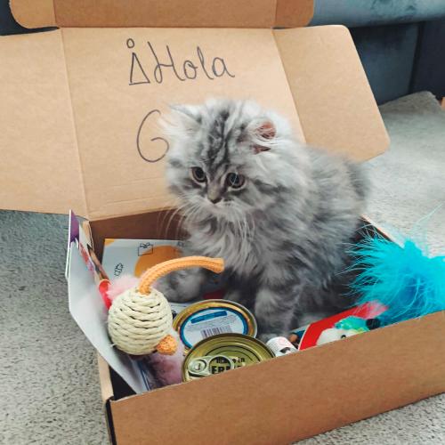 gato-surprise-my-cat