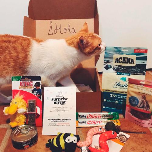 caja-para-gatos
