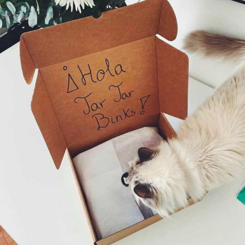 caja-suscripcion-gato