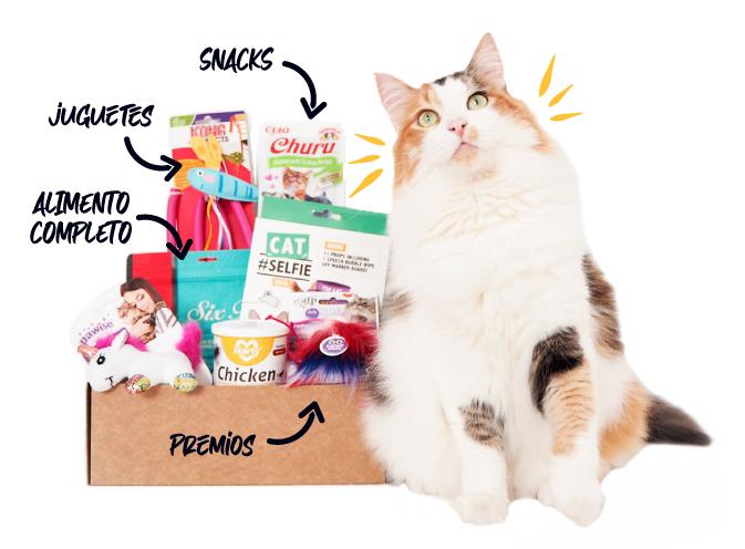 caja-mensual-gato