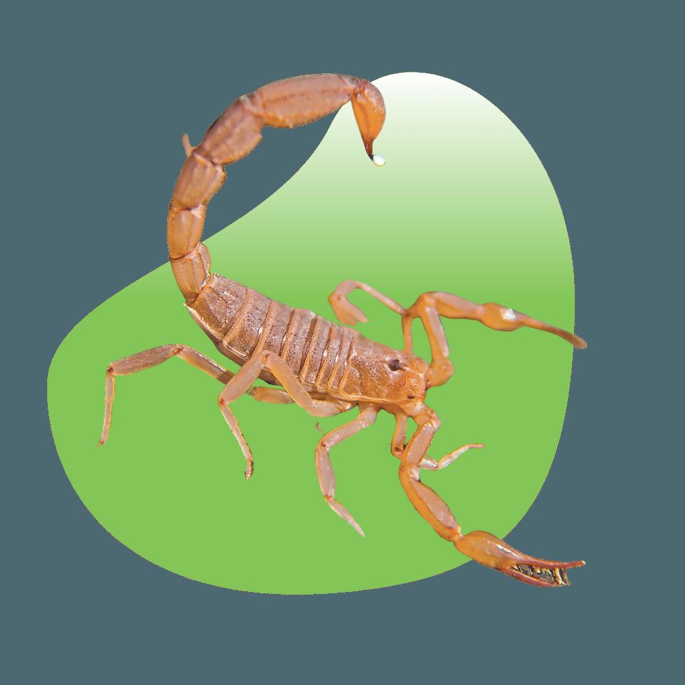 Recurring Pest Control