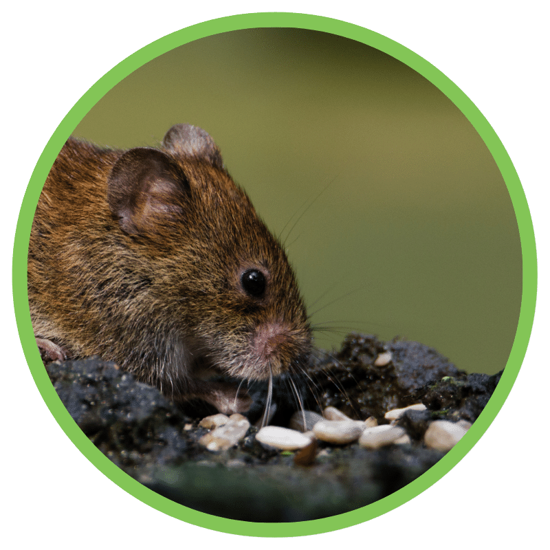 Residential Pest Control Icon