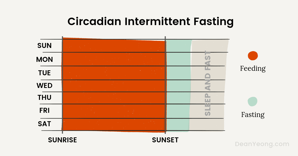 Circadian intermittent fasting schedule