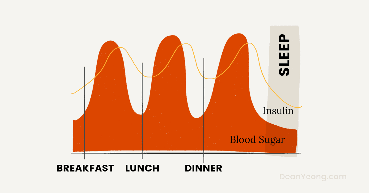 How intermittent fasting works - the fed state